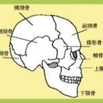 頭のストレスが影響する骨と症状