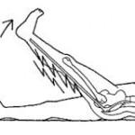 足を持って膝を伸ばして挙上させます