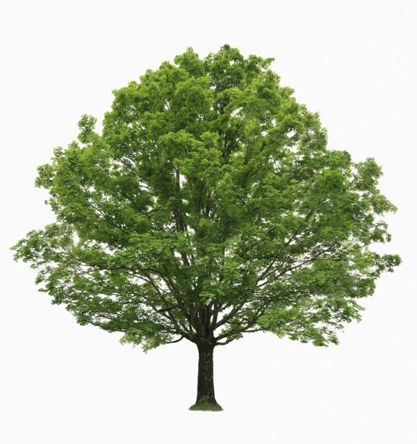 インナーチャイルドの木