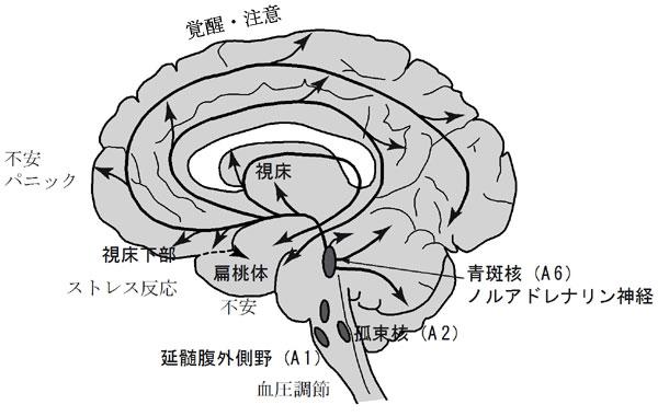 パニック障害と脳内循環