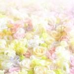 バラの花で不安解消