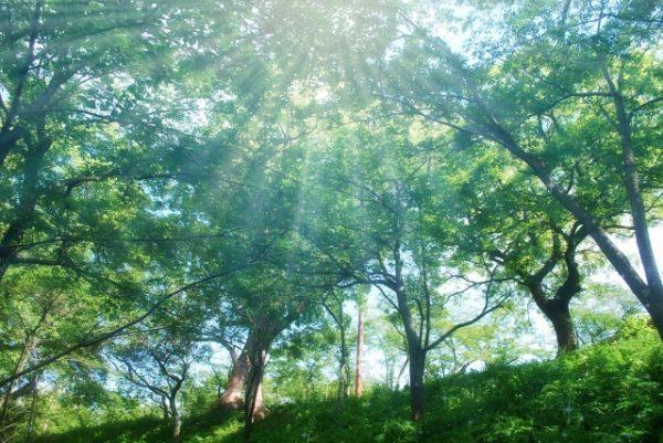 森林浴で不安障害を解消